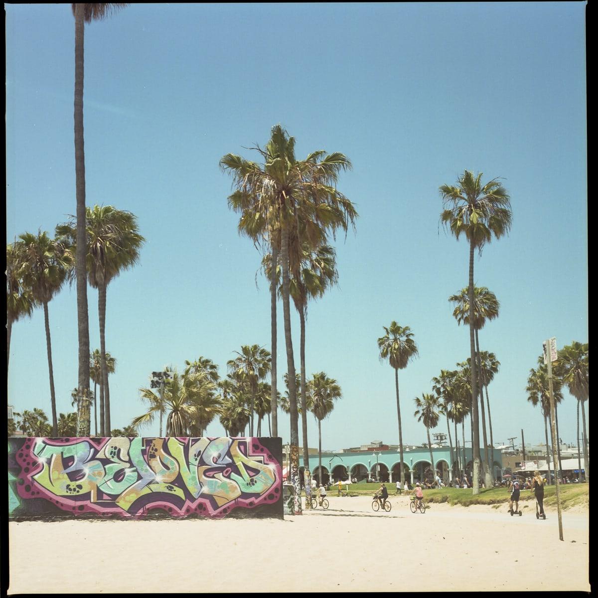 Palm trees an graffiti at Venice Beach, California