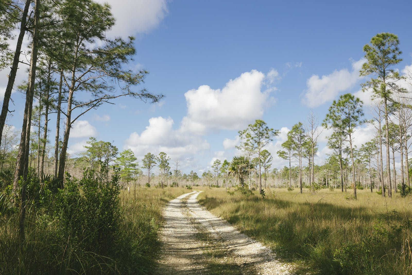 Everglades Trail