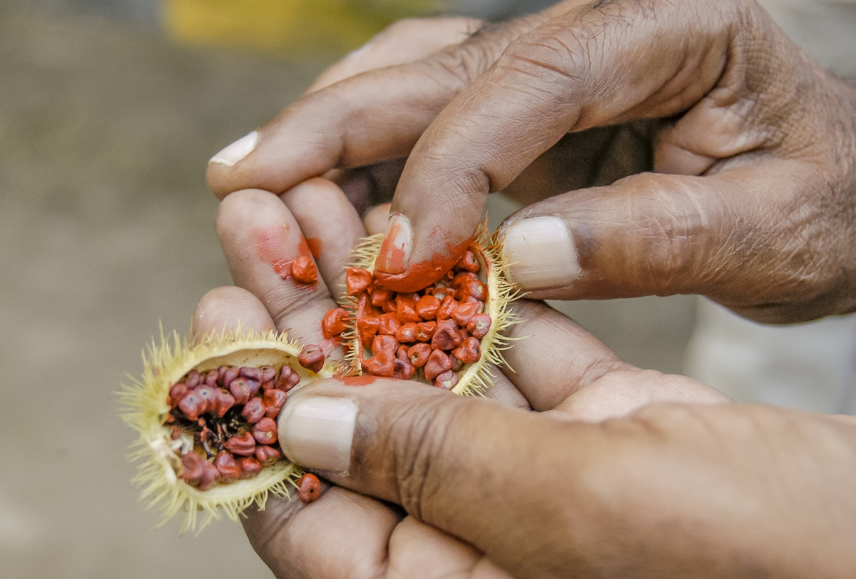 Man dipping finger in an annatto or roucou for bindi