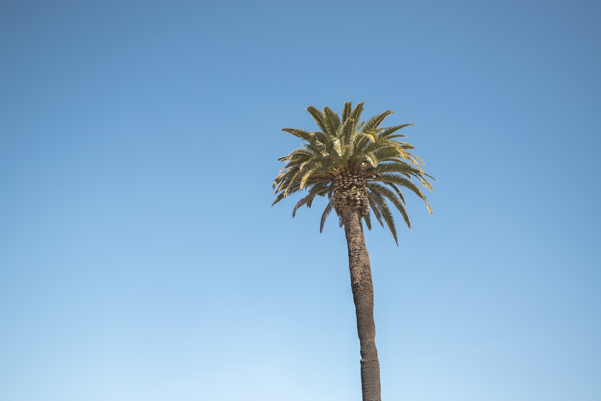 A palm tree at Ocean Beach, San Diego