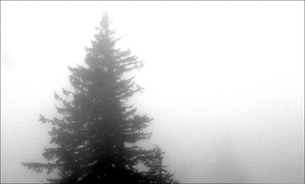 Tree in Fog in Alaska