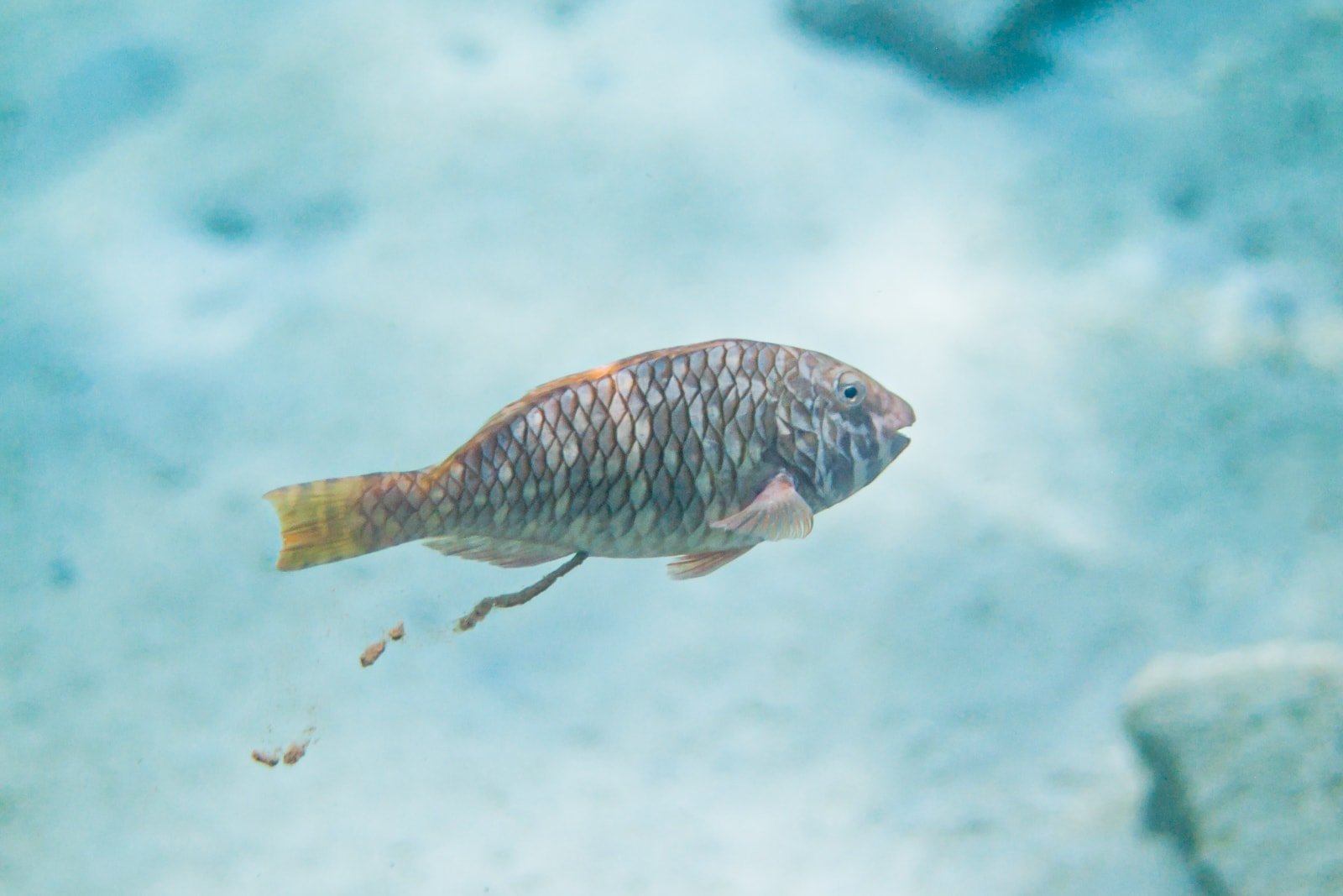 A fish taking a crap in the sea because of information overload.