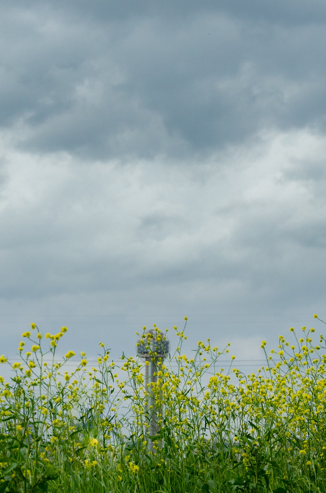 Reunion Tower behind a field of flowers