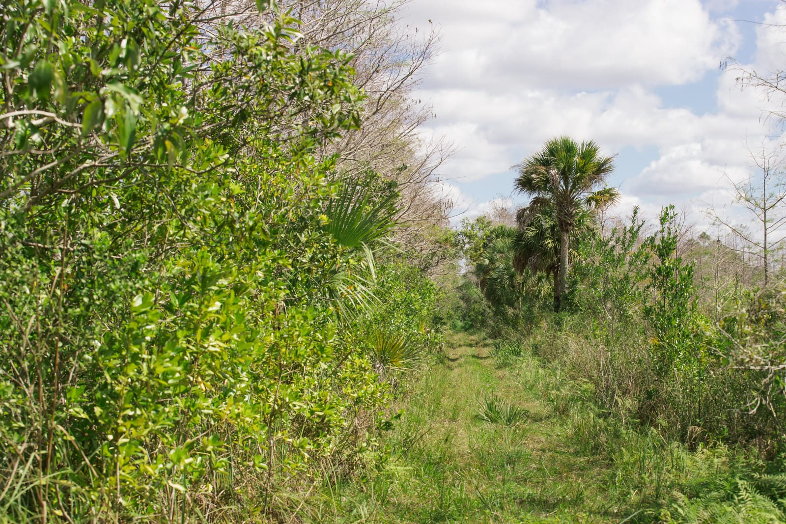 Everglades hiking trails