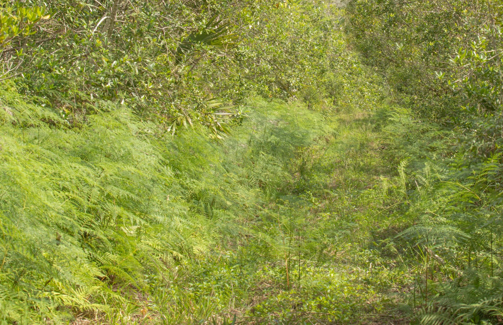 Ferns, trees, and shrubs densely packed together in the Florida Everglades