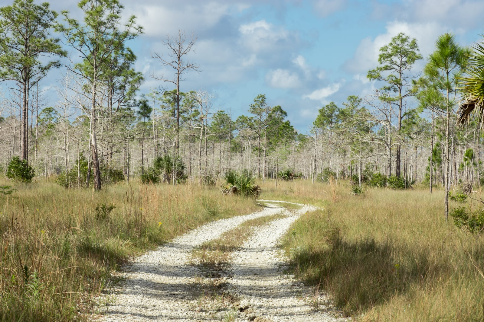 Hiking An Everglades Trail