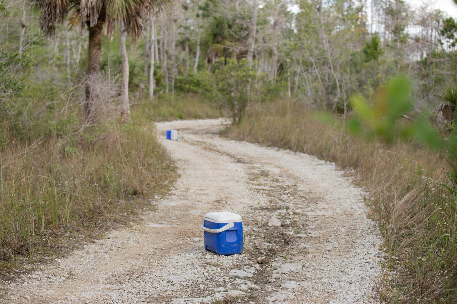 Two abandoned coolers on an Everglades trail