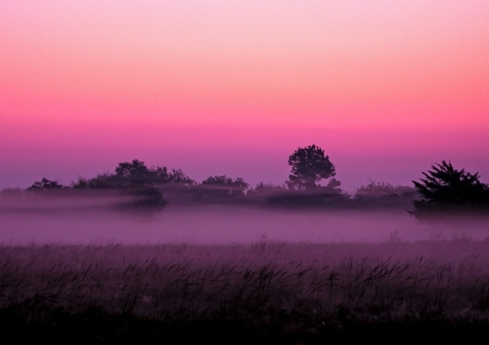 Morning foggy purple sunrise