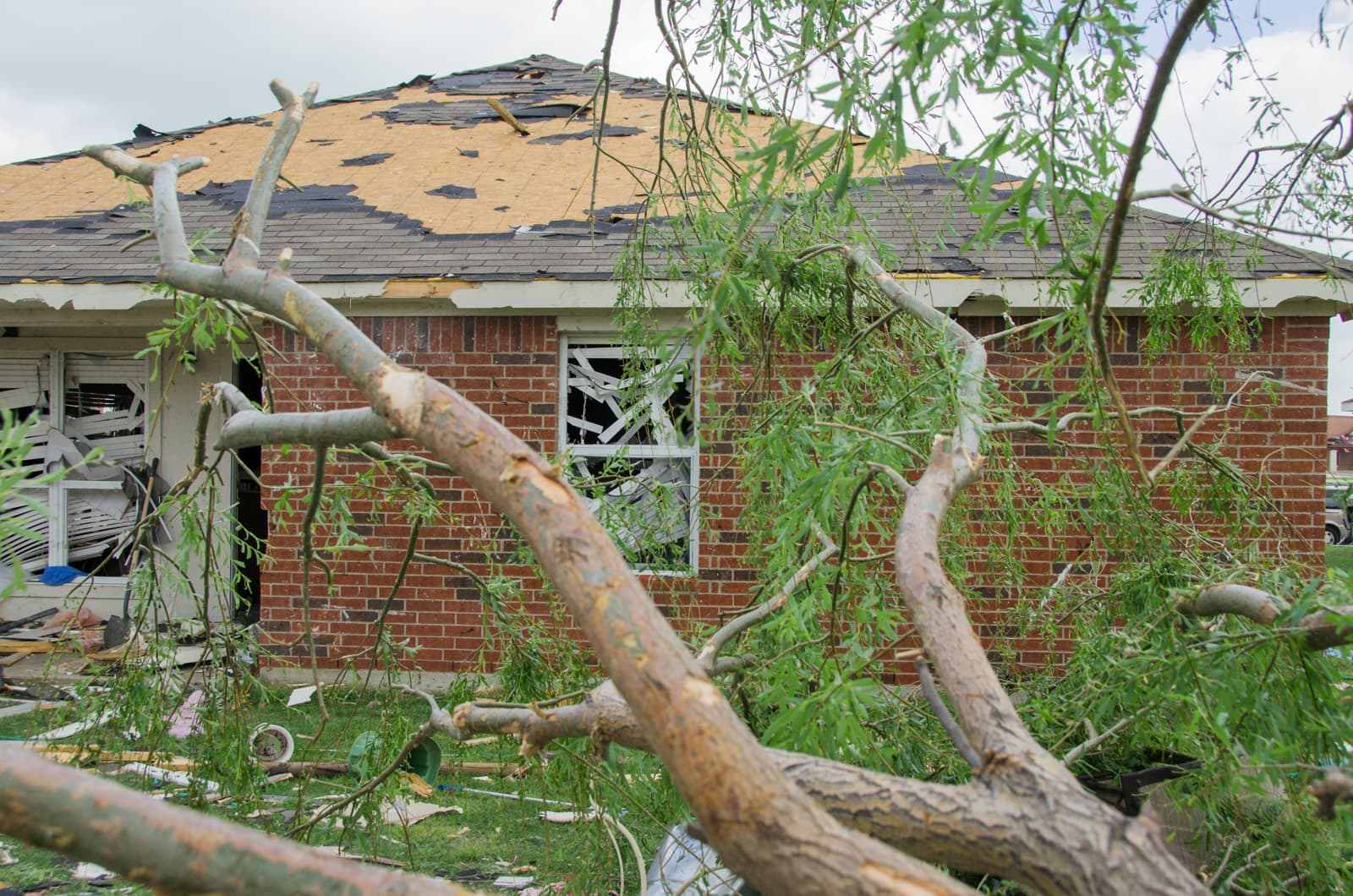A fallen tree and damaged house