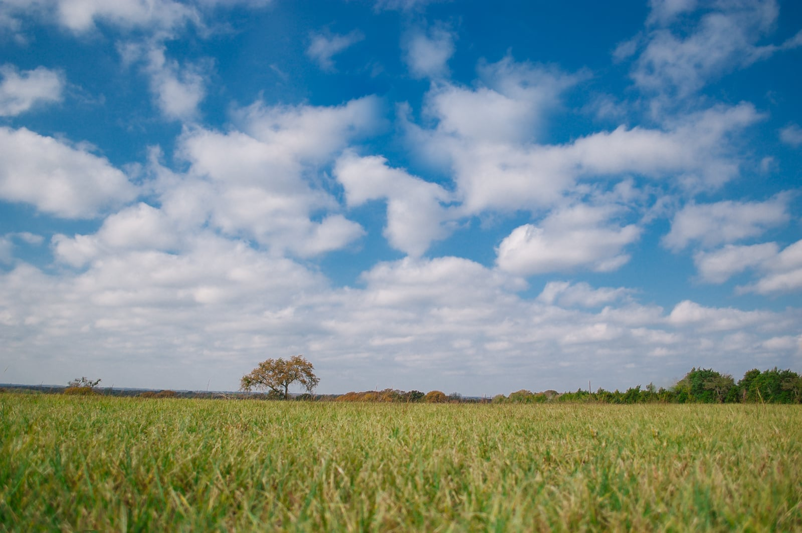 A lone tree in an East Texas pasture