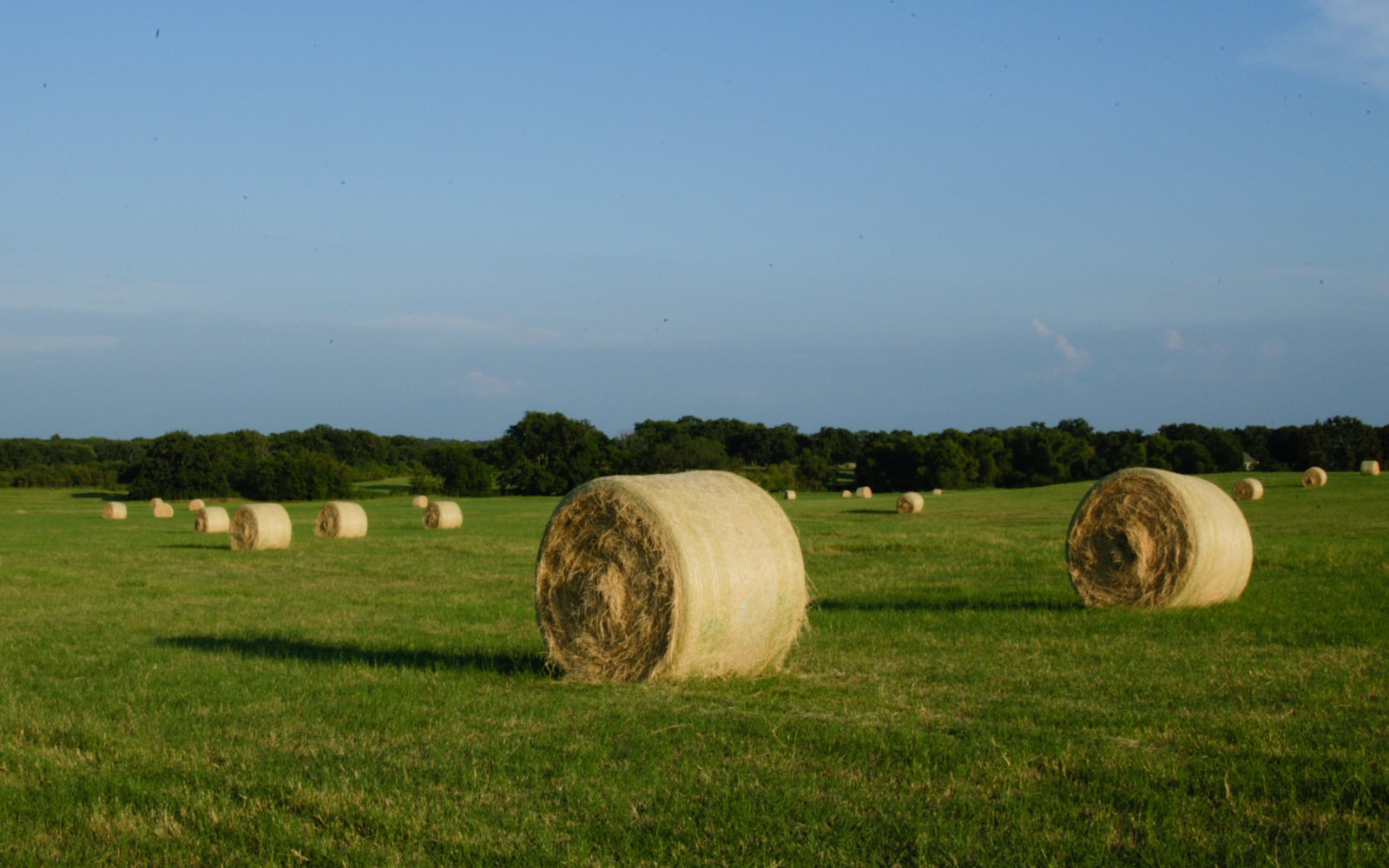 Hay bales in an East Texas landscape