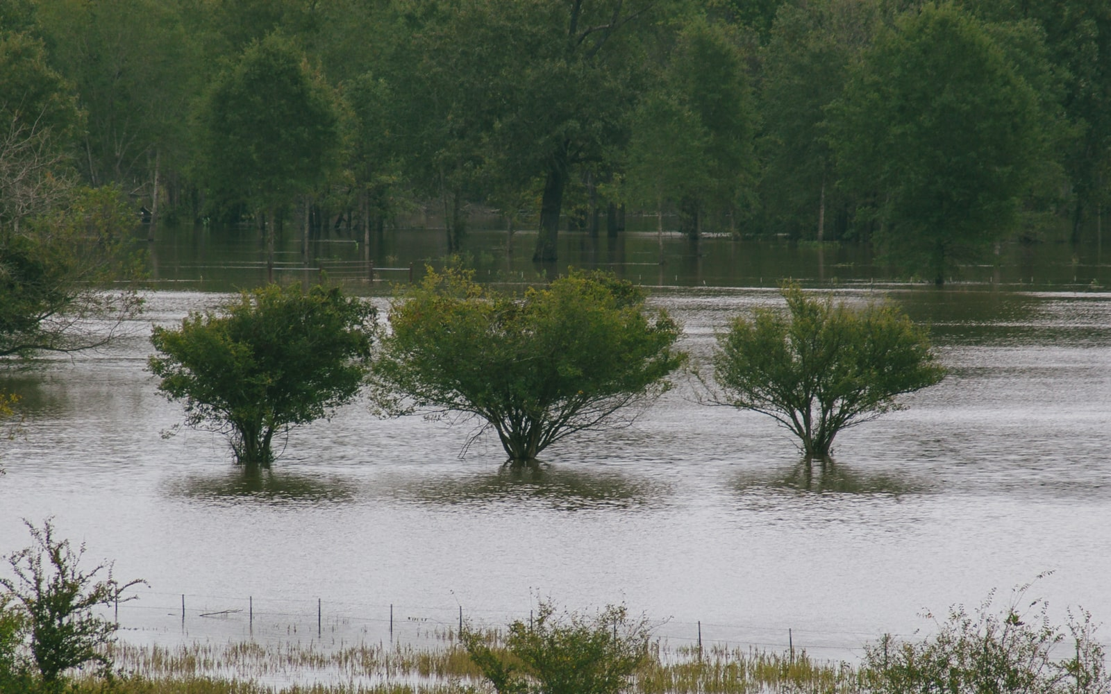Trees in a flooded pasture