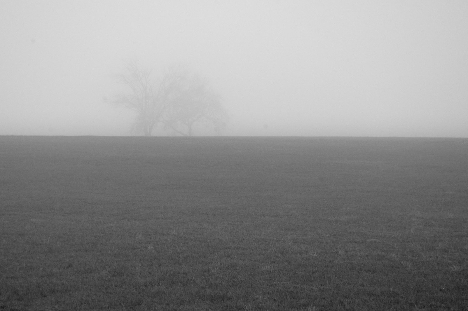 A pasture with trees in the distance covered with fog