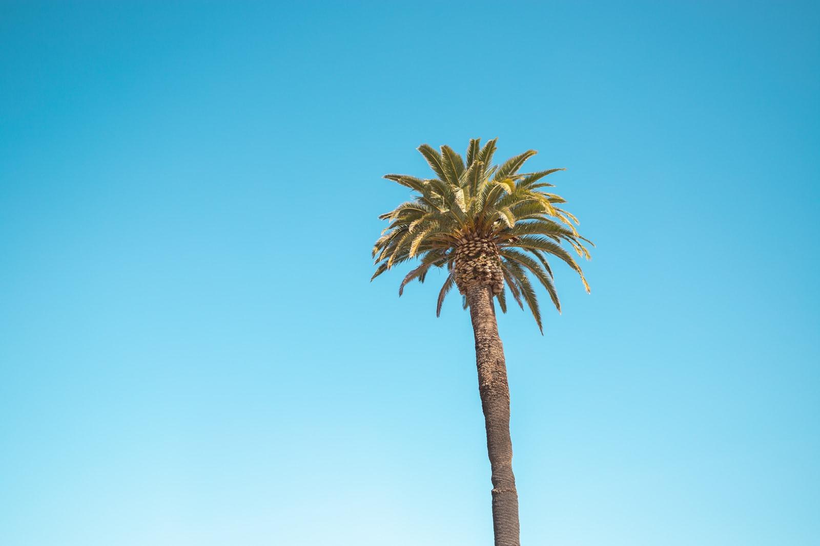 A palm tree at Ocean Beach