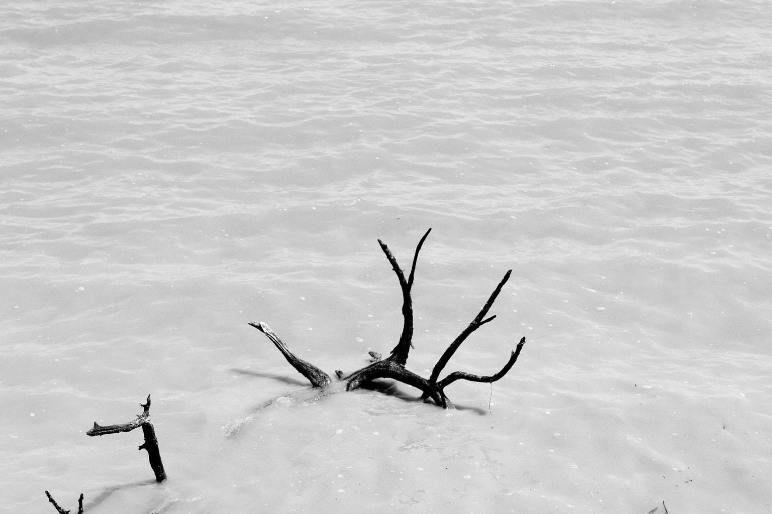 Tree In Lake Ray Hubbard