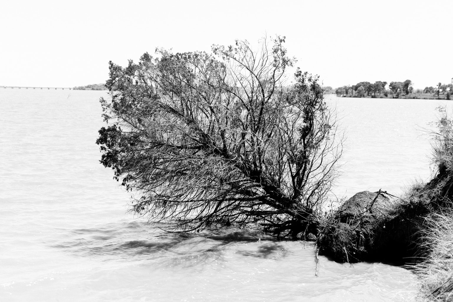 Silhouette of a tree in the lake