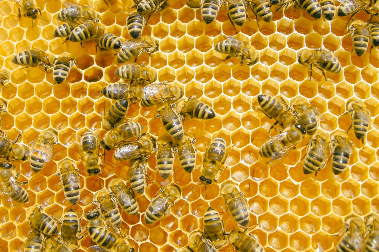 Beekeeping And Honey Production Photo